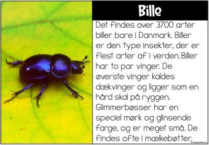 Læsekort - insekt og småkryb
